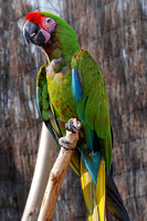 Parrot at Mesker Park Zoo in Evansville, IN
